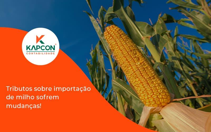 Tributos Sobre Importação De Milho Sofrem Mudanças! Kapcon - Notícias e Artigos Contábeis em São Paulo   Kapcon Contabilidade